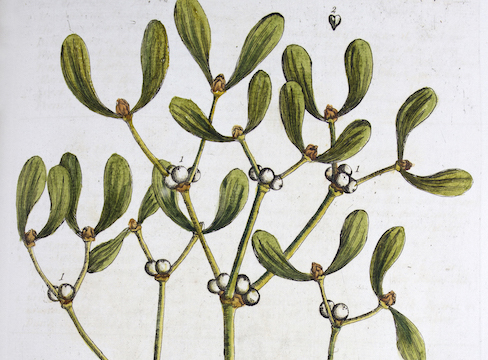 An antique book on herbs