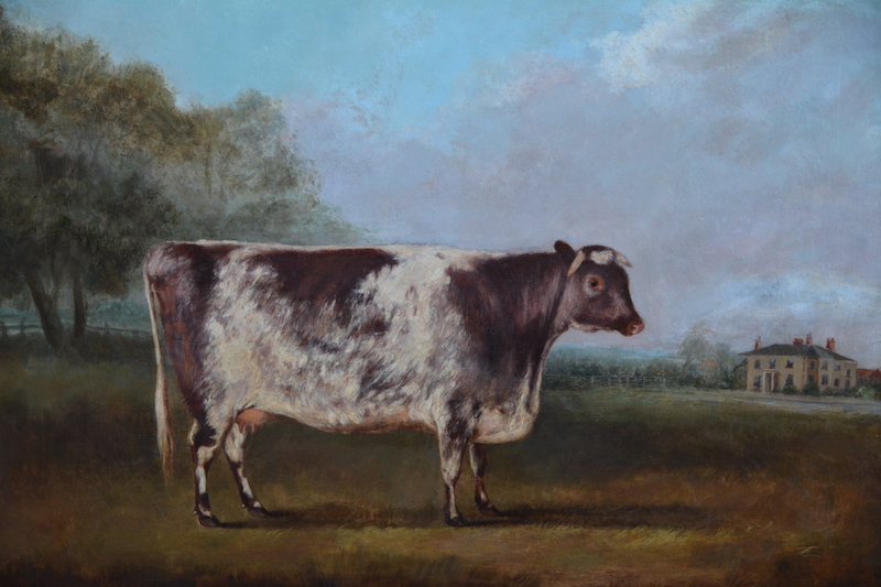 Prize short-horn cow painting