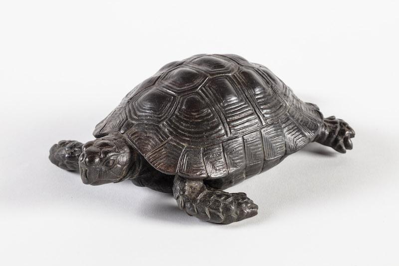 One of the four returned tortoises at Kingston Lacy, Dorset
