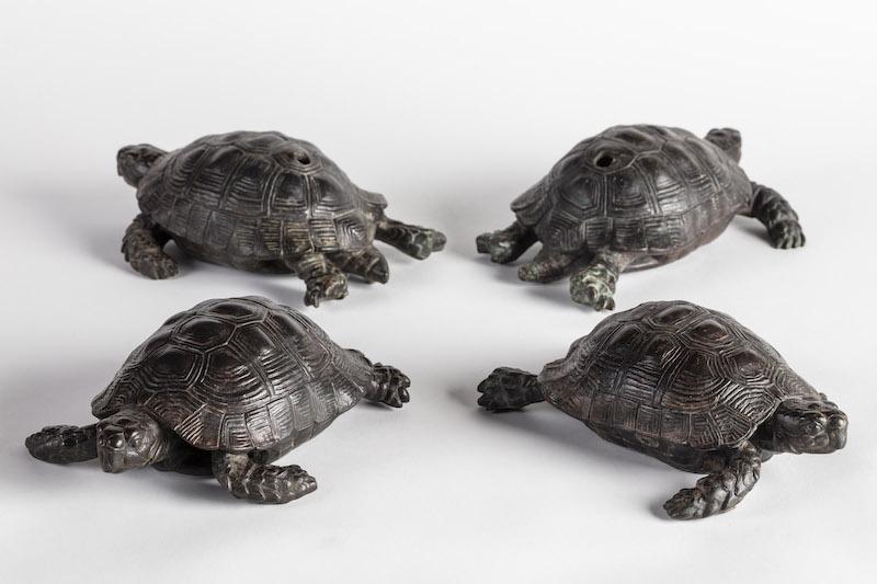 The four returned tortoises at Kingston Lacy, Dorset