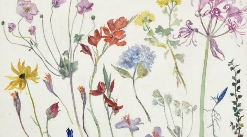 Flower Studies by Dame Elizabeth Blackadder